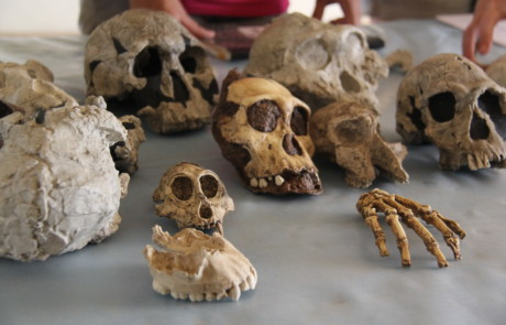 Casts of important fossil specimens